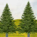 Τα δύο δένδρα